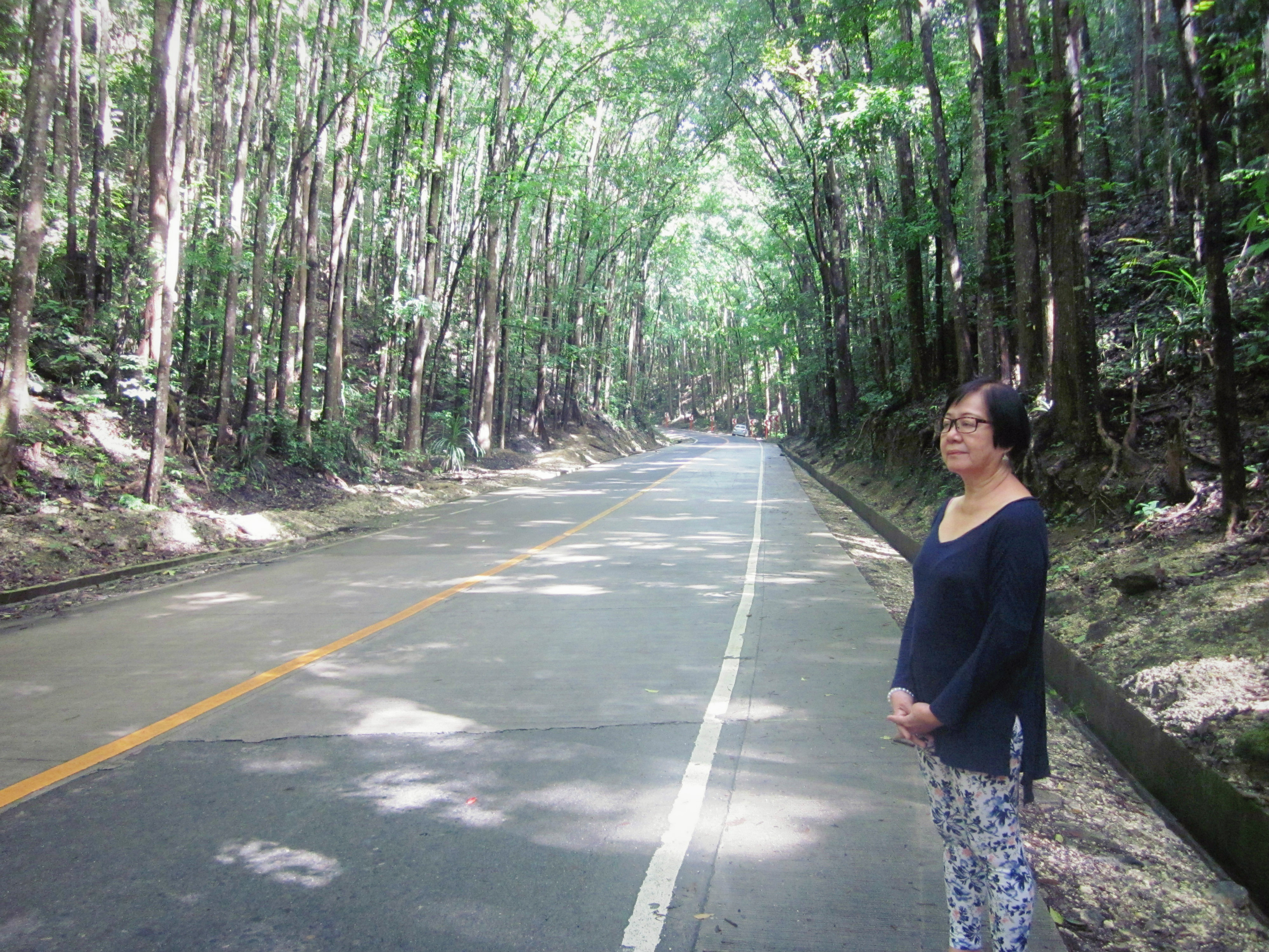 bohol-man-made-forest